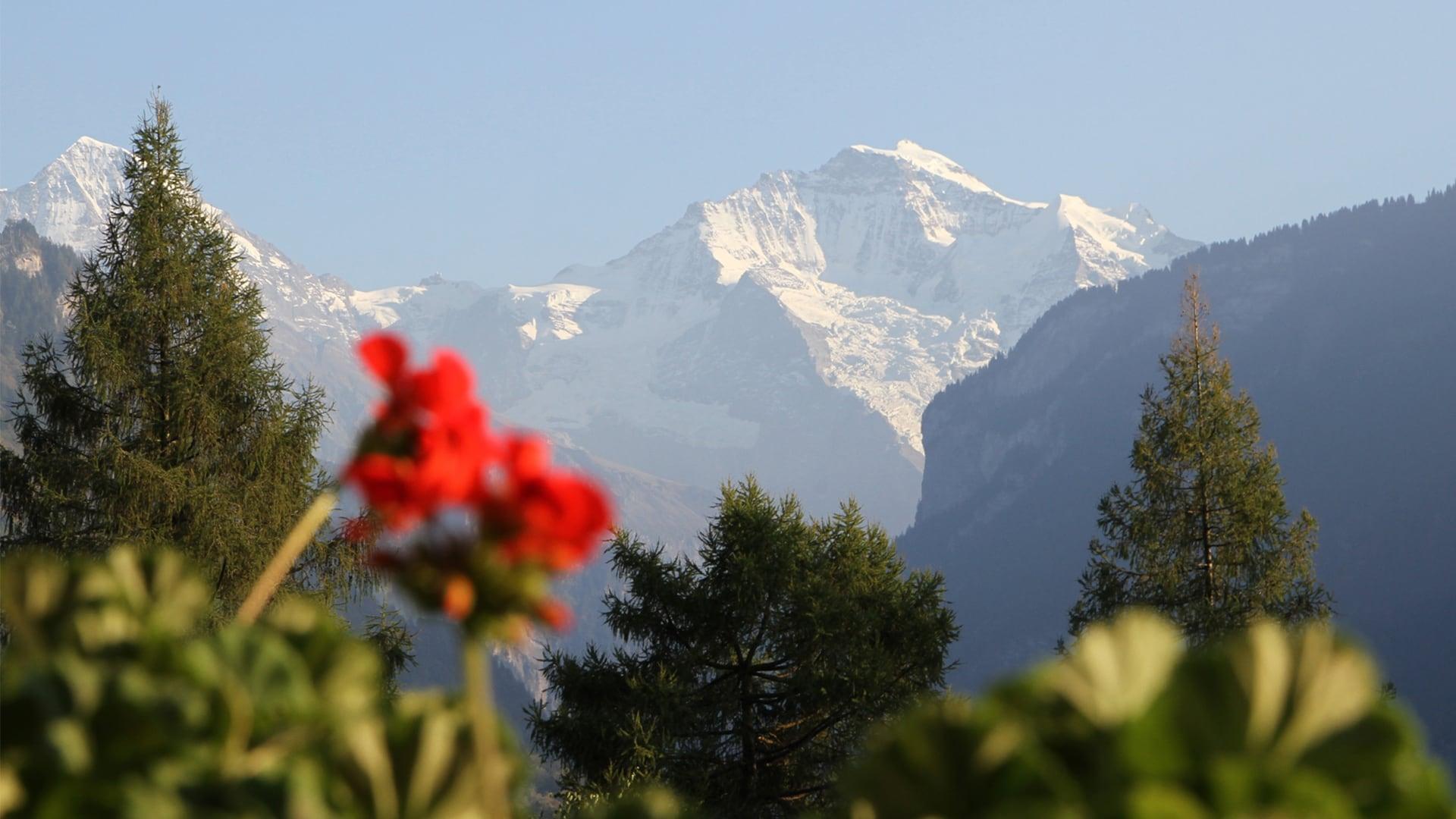 Aussicht Jungfrau